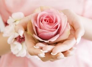 Rosa nelle mani